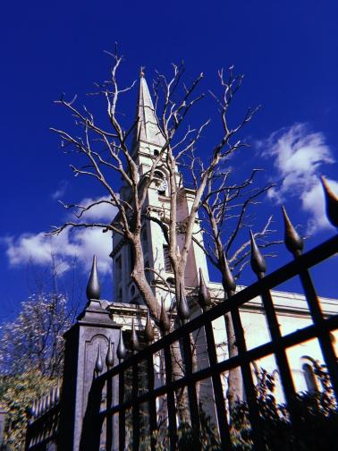 stark churches n trees